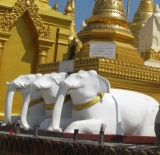 Three statues of white elephants locate at the world famous Shwedagon pagoda in Rangoon, Burma.