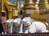 A woman walks through three statues of white elephants at the world famous Shwedagon pagoda in the former capital Rangoon, Burma.