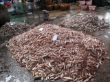 Fish factory in Ranong, Thailand.