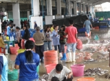 Burmese workers are working at the fish factory in Ranong,  Southern Thailand.