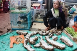 Trade wildlife pieces at public square market of Mong La in eastern part of Shan State, border of China.( Photo - Nang Seng Nom / The Irrawaddy )