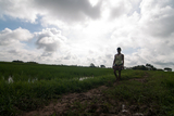 A resident from Toon Tay Township passing through a paddy field in Toon Tay Township which lies on the other side of Yangon City and where 'Yangon New Town Plan' is schemed to be implementing within Septemer. (Photo – Sai Zaw/ Irrawaddy)