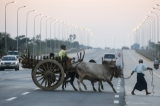A farm cart returning from farm at a roadside in Naypyidaw on Jan. 3, 2015 evening. ( Photo - JPaing / The Irrawaddy)