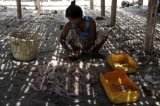 Cho Wai Than, 33, sorts out fishes and prawn her husband caught. (Photo: Tin Htet Paing / The Irrawaddy)