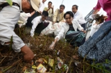 Aung San Suu Kyi collects litter during during a campaign in her constituency of Kawhmu, Rangoon Division on Dec. 13. (Photo: J Paing / The Irrawaddy