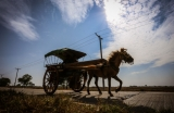Tin Win has driven a horse-drawn cart through the streets of Kyauktan for the past 35 years,Rangon,Kyauktan, January 19. Photo: Pyay Kyaw / The Irrawaddy