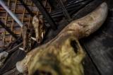 Animal skulls, seen in the village. (Photo: Pyay Kyaw / The Irrawaddy)