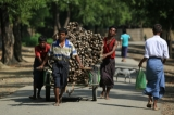 Muslim villagers carry their firewood cart  in ALalThanKyaw village,Maungdaw on Oct 16, 2016.