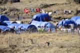 "Refugees - IDP""s"