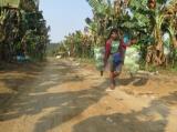 Tissue-banana plantation in Kachin State's Lamyang Township in March 2019.   Photo - Nan Lwin/ Irrawaddy
